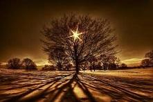 l`étoile intérieure brille à travers l`écorce grâce au chamanisme
